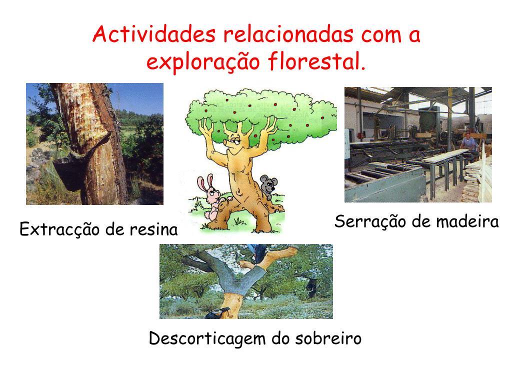 Actividades relacionadas com a exploração florestal.