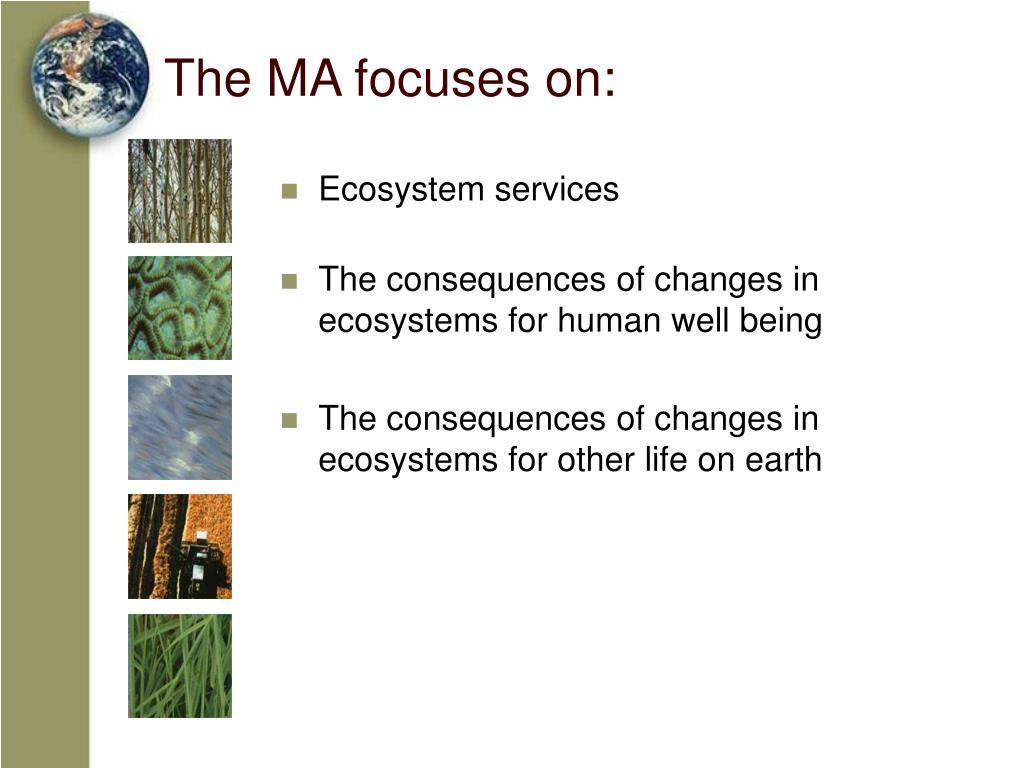 The MA focuses on: