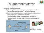 oligodendrosyttene