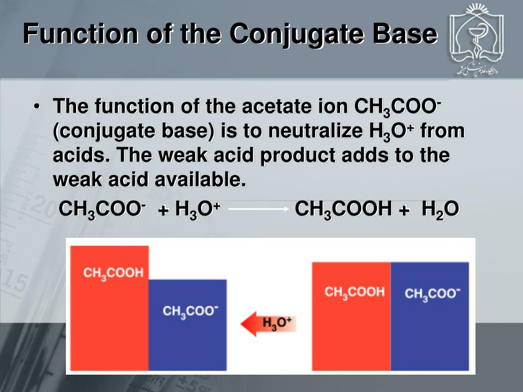 Function of the Conjugate Base