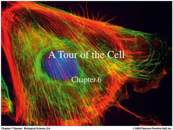 a tour of the cell n.