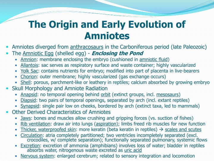 the origin and early evolution of amniotes n.