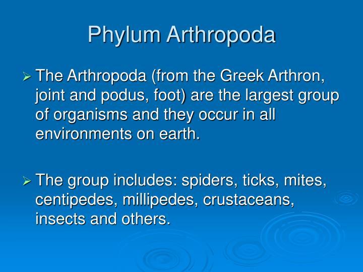 phylum arthropoda n.