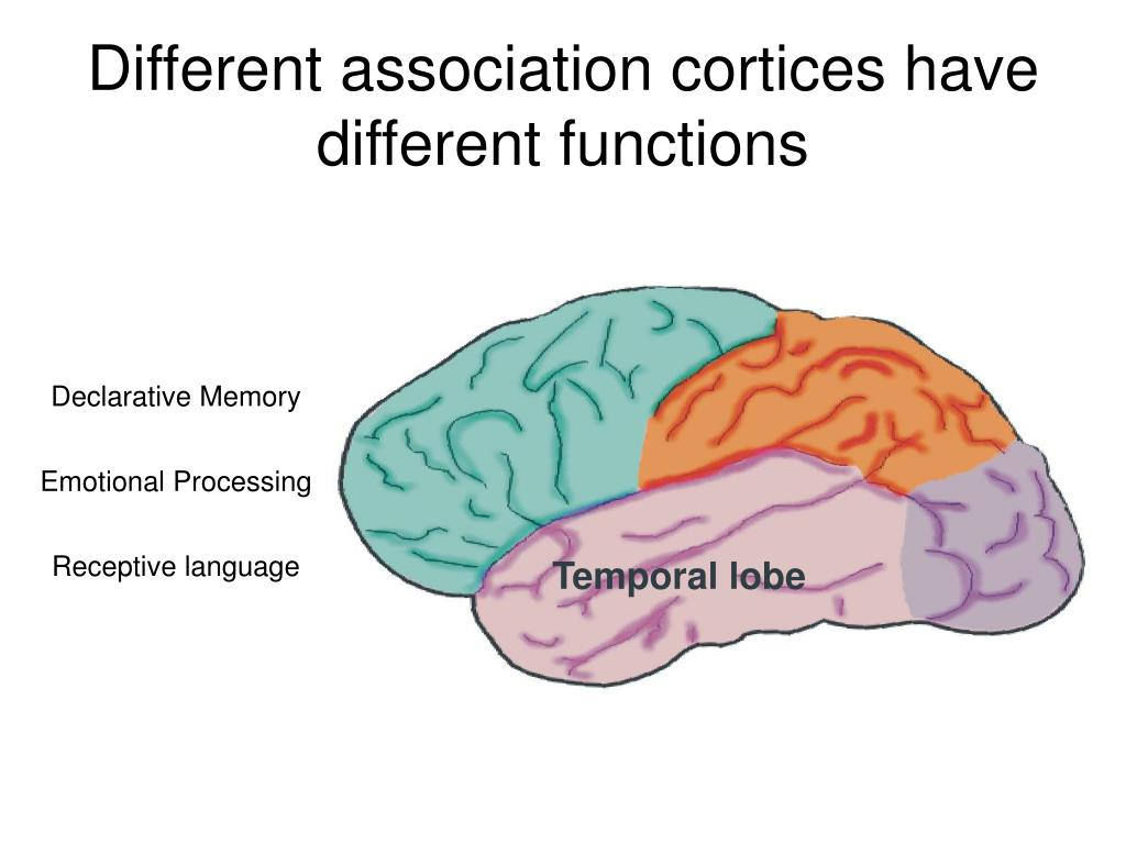 Different association cortices have different functions