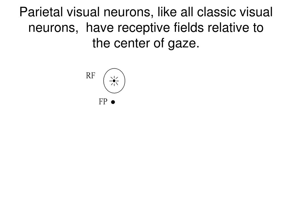 Parietal visual neurons, like all classic visual neurons,  have receptive fields relative to the center of gaze.