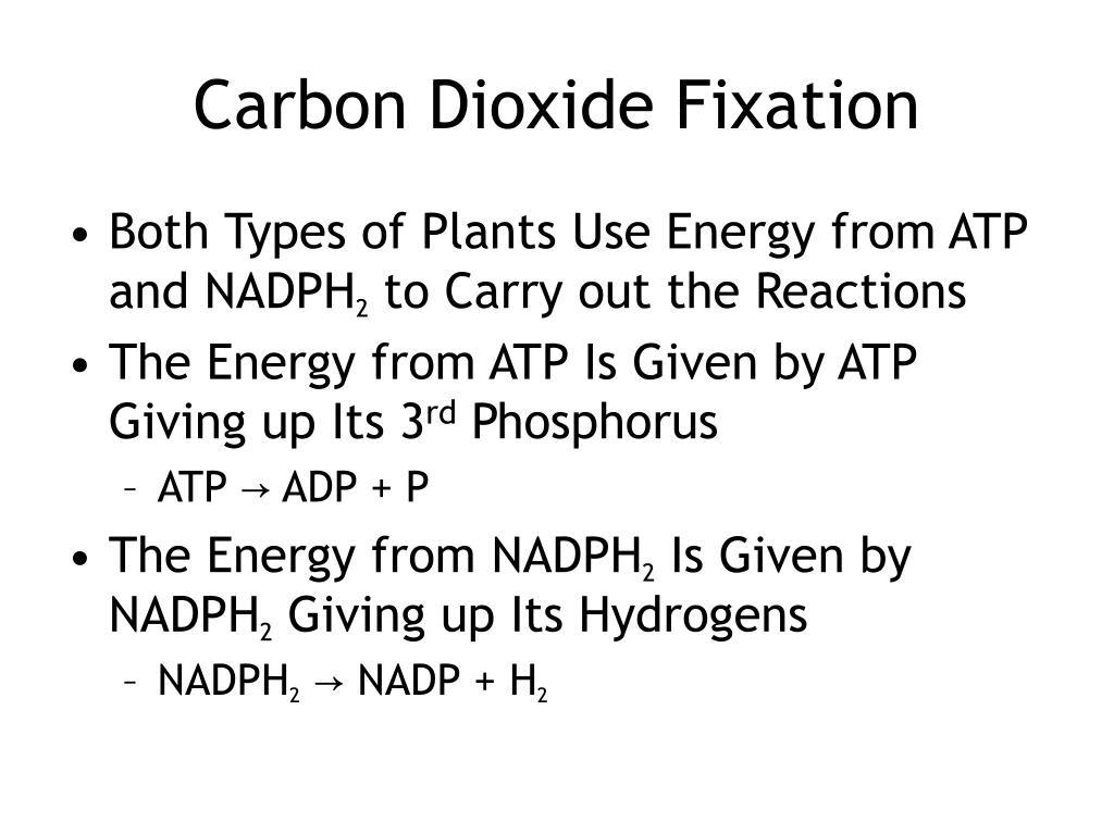 Carbon Dioxide Fixation