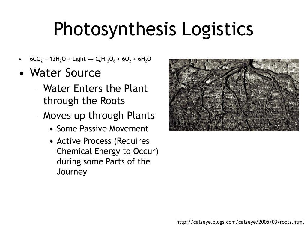 Photosynthesis Logistics
