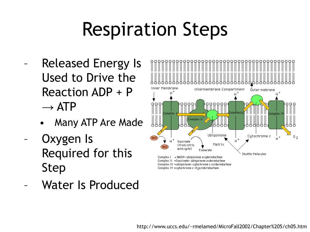 Respiration Steps