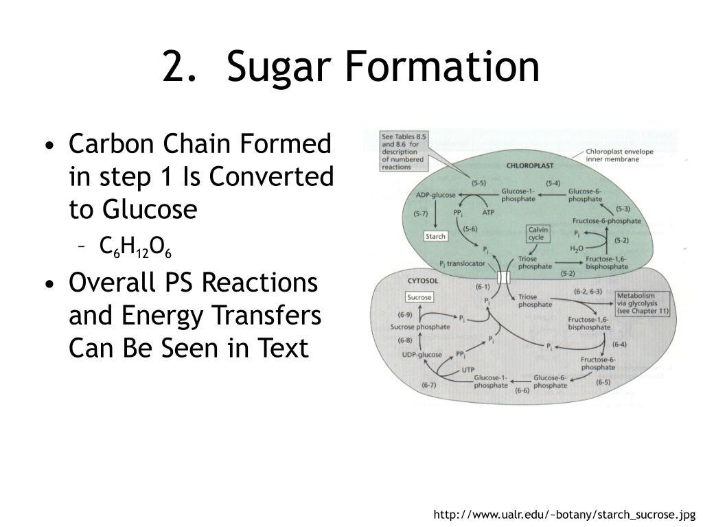 Sugar Formation