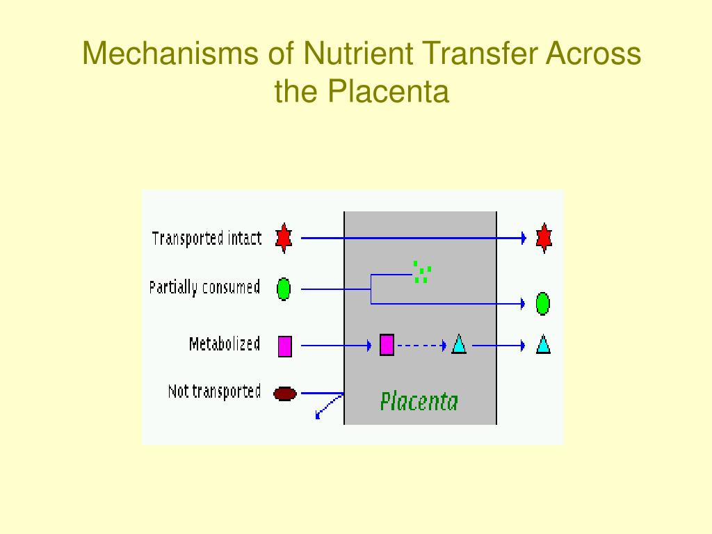 Mechanisms of Nutrient Transfer Across the Placenta