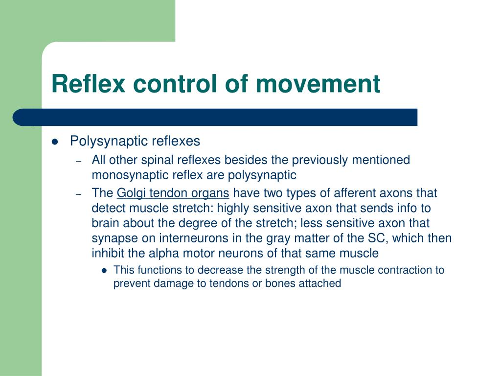 Reflex control of movement