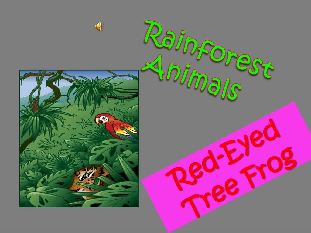 rainforest animals l.