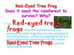 red eyed tree frog does it need the rainforest to survive why