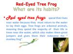 red eyed tree frog what are its habits