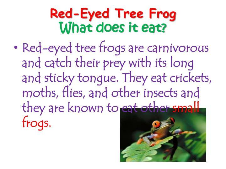 PPT - rainforest animals vinicius PowerPoint Presentation ...