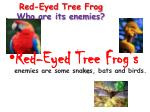 red eyed tree frog who are its enemies