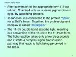 vitamin a and vision