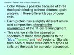vitamin a retinal s role in vision chapter 3228