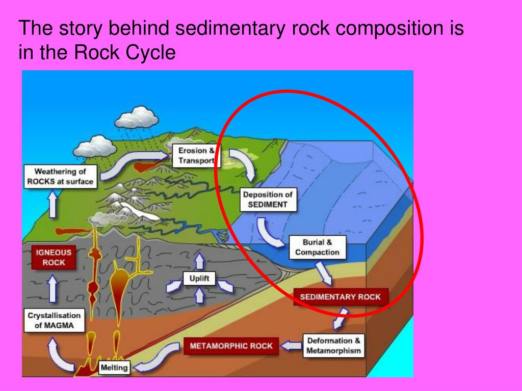 The story behind sedimentary rock composition is in the Rock Cycle
