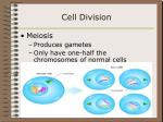 cell division22