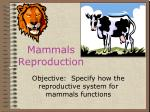 mammals reproduction