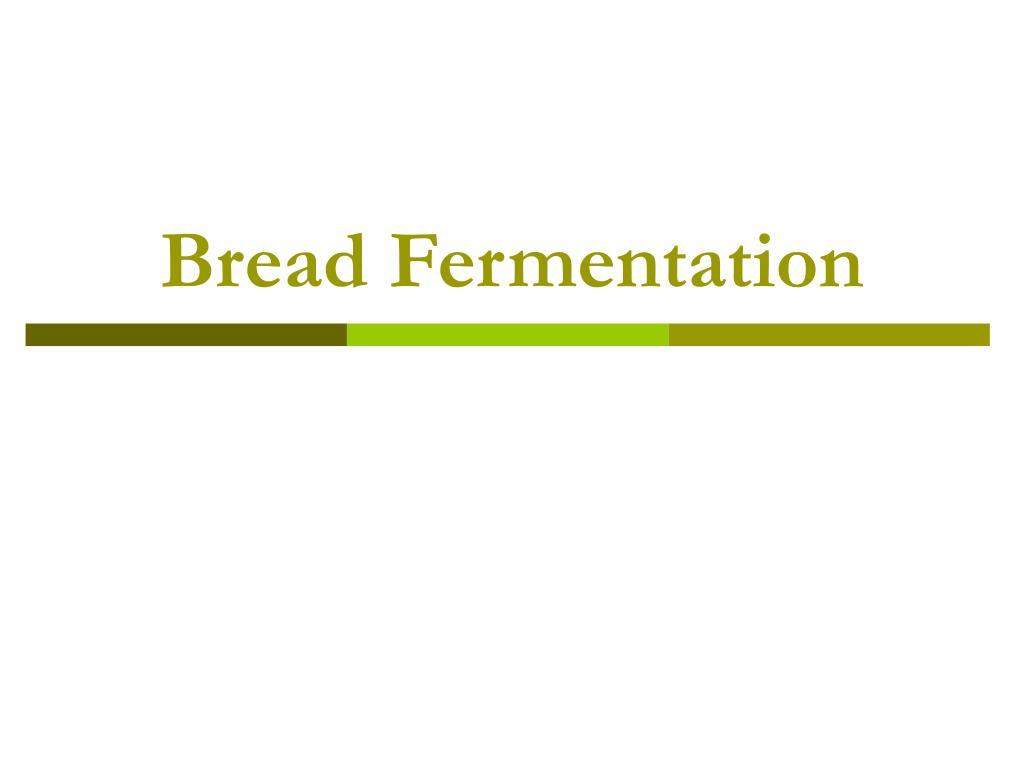 bread fermentation l.