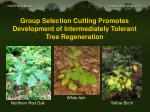 group selection cutting promotes development of intermediately tolerant tree regeneration