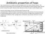antibiotic properties of hops