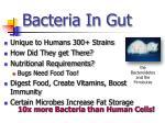 bacteria in gut