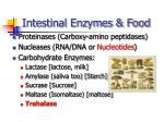 intestinal enzymes food