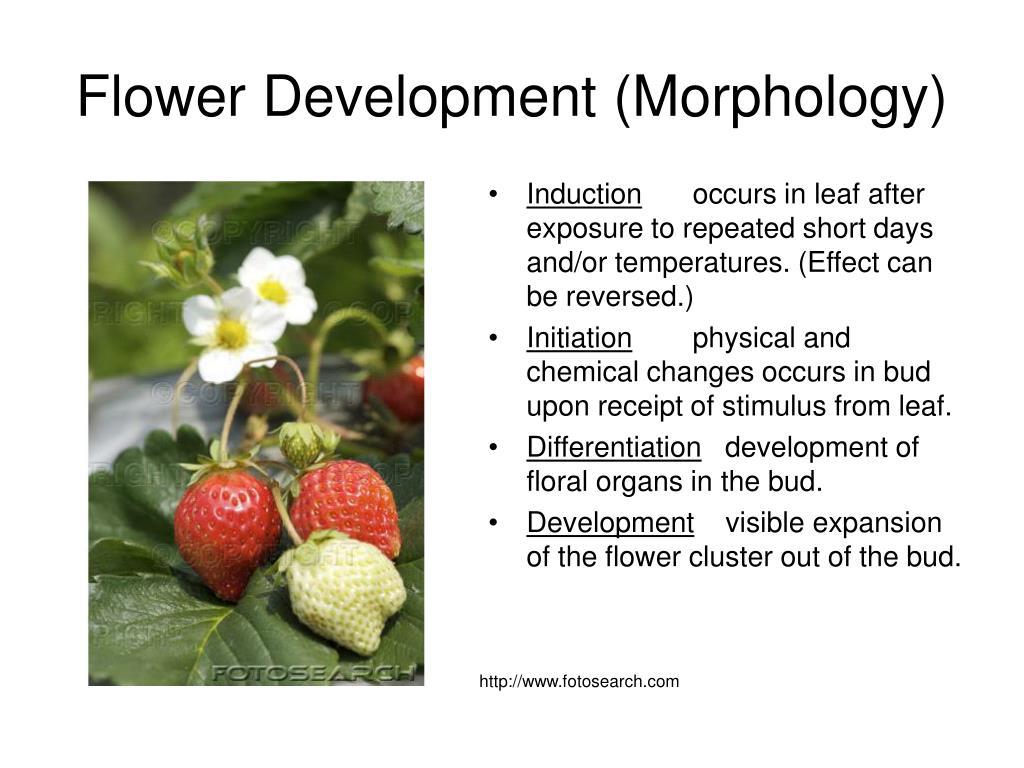 Flower Development (Morphology)