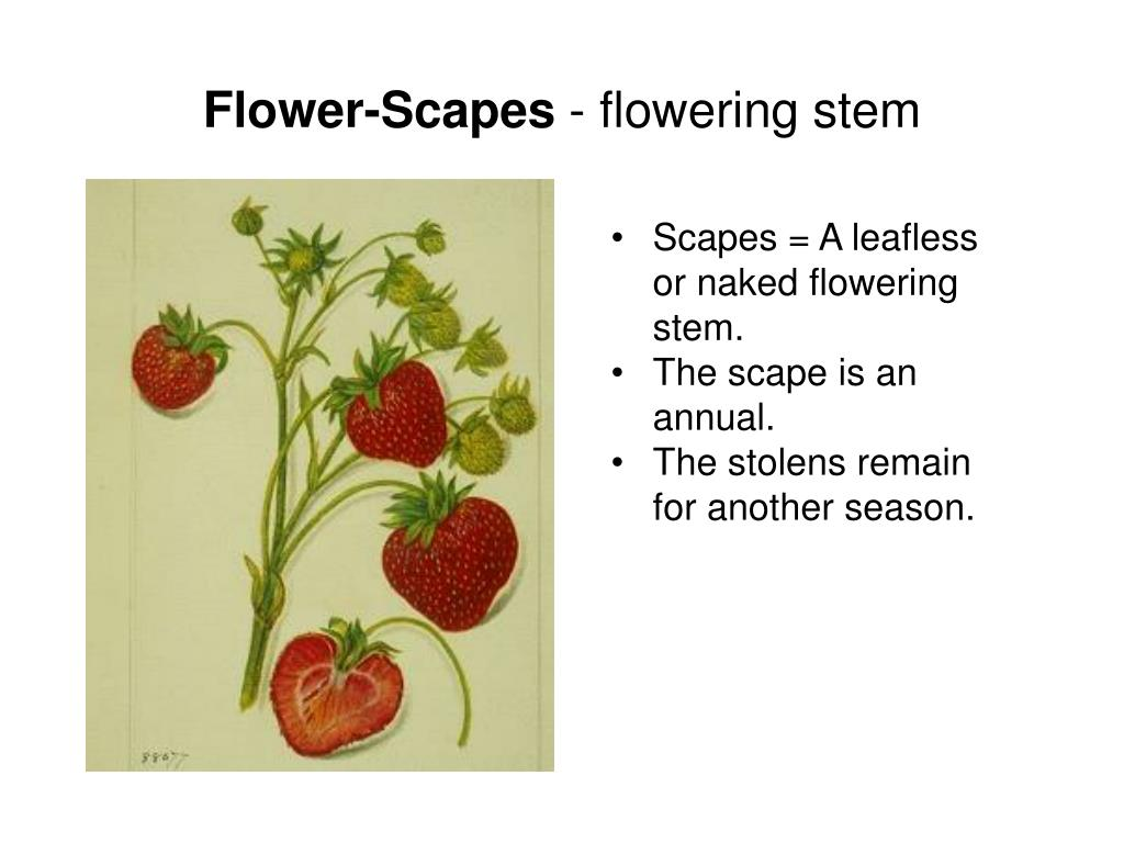 Flower-Scapes