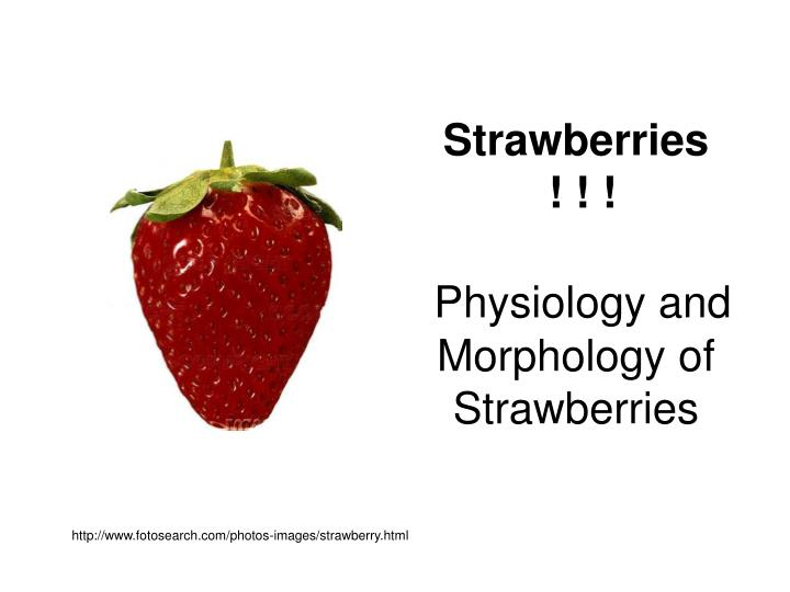 Http www fotosearch com photos images strawberry html