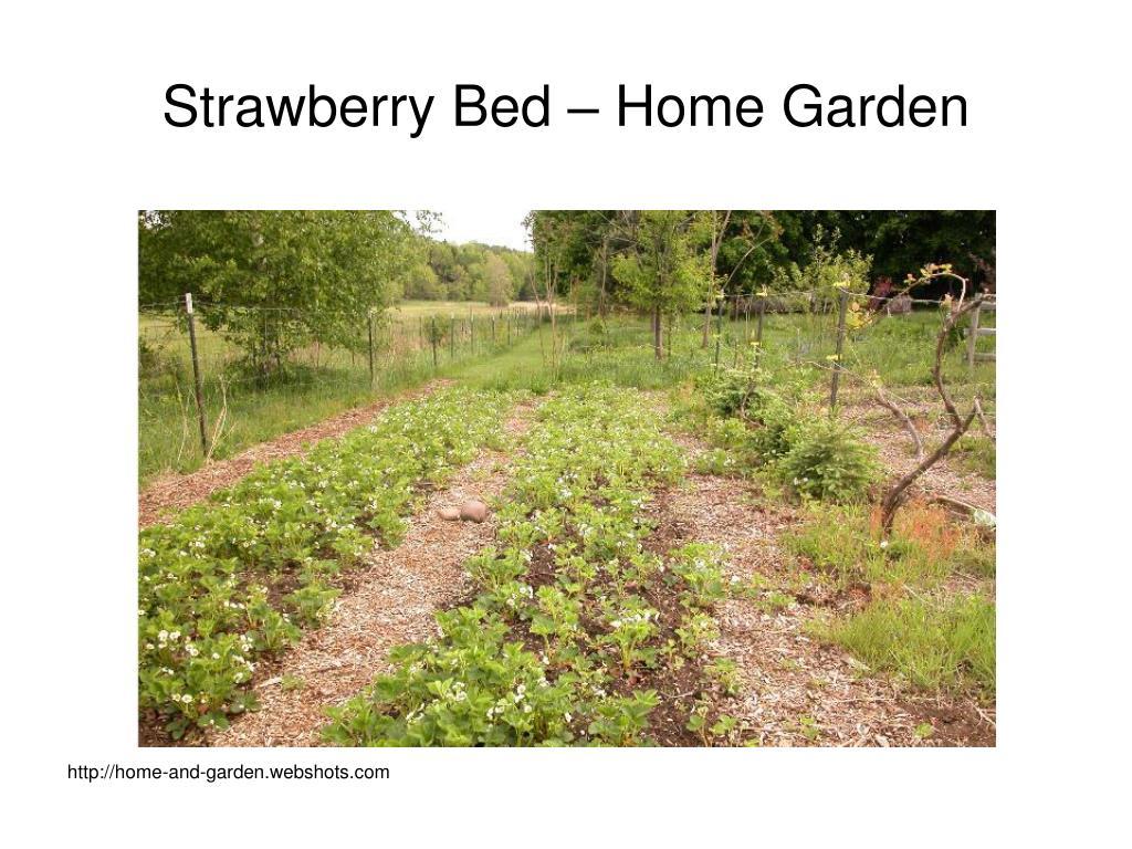 Strawberry Bed – Home Garden
