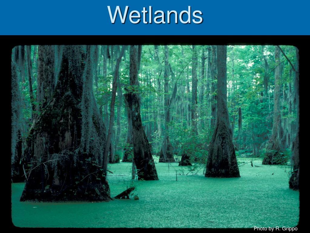 wetlands l.