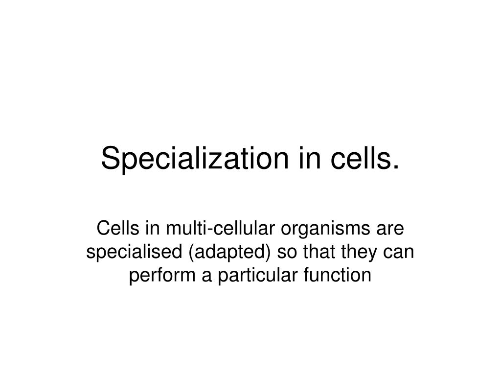 specialization in cells l.