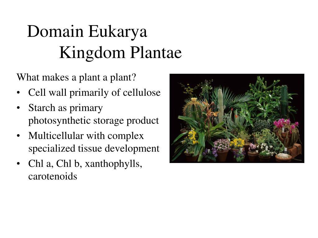domain eukarya kingdom plantae l.