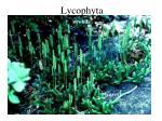 lycophyta