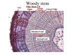 woody stem