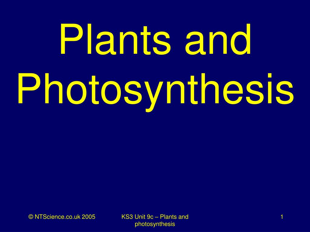 plants and photosynthesis l.