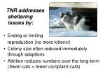 tnr addresses sheltering issues by