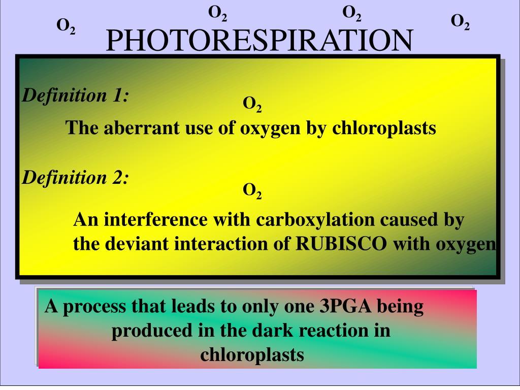 photorespiration l.