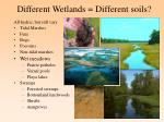 different wetlands different soils