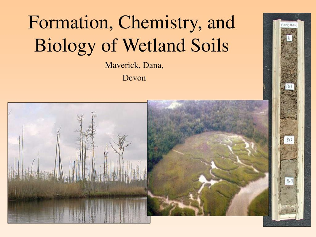formation chemistry and biology of wetland soils l.