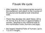 f buski life cycle30