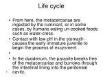 life cycle5