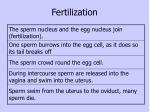 fertilization6