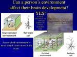 can a person s environment affect their brain development yes