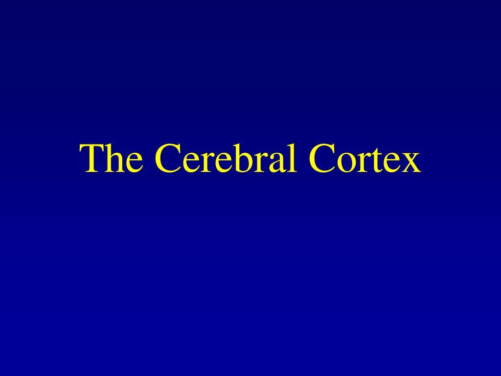 the cerebral cortex l.