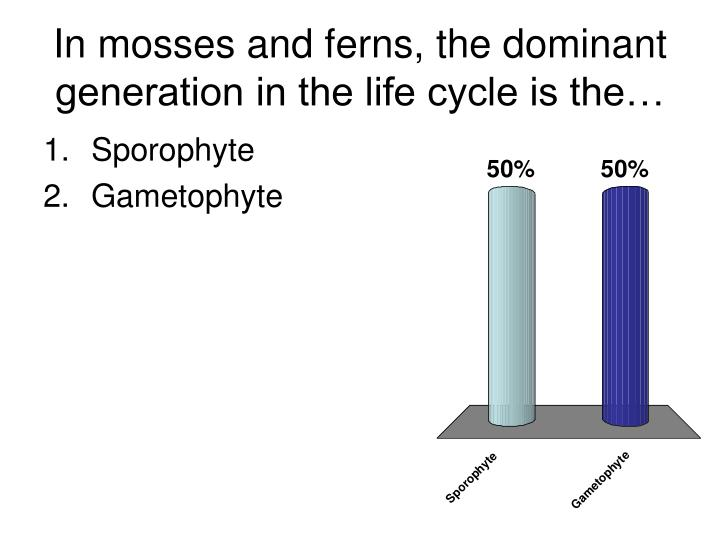 In mosses and ferns the dominant generation in the life cycle is the